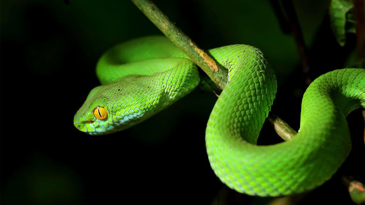 trekking, hiking và đại cương về rắn